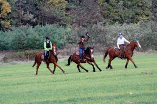 Galeria Zawody jeździeckie